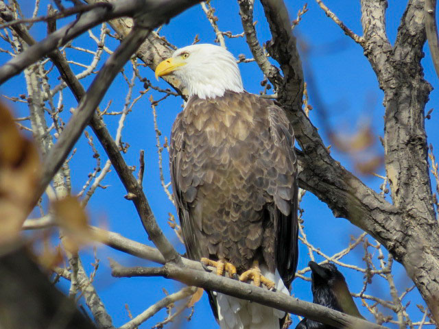 Bald+Eagles+and+other+Birds+Grace+the+Bosque